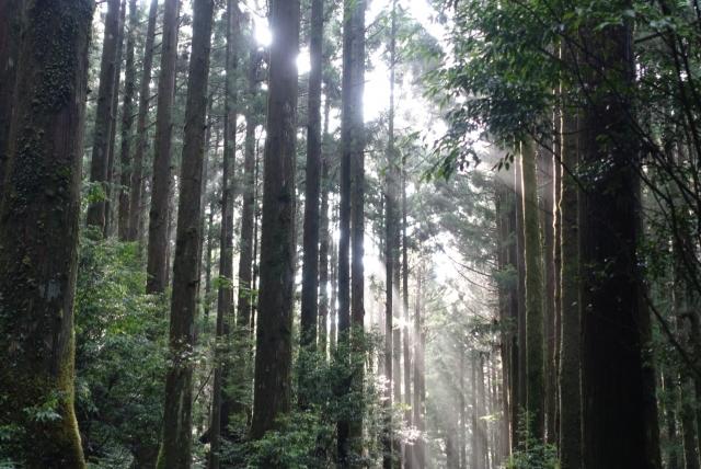 f:id:misumi_ikiinokurasiino:20210501141456j:plain