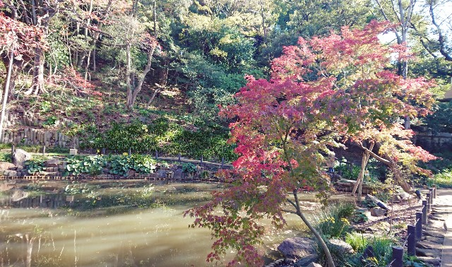 f:id:mitaka_natsu:20181124121214j:image