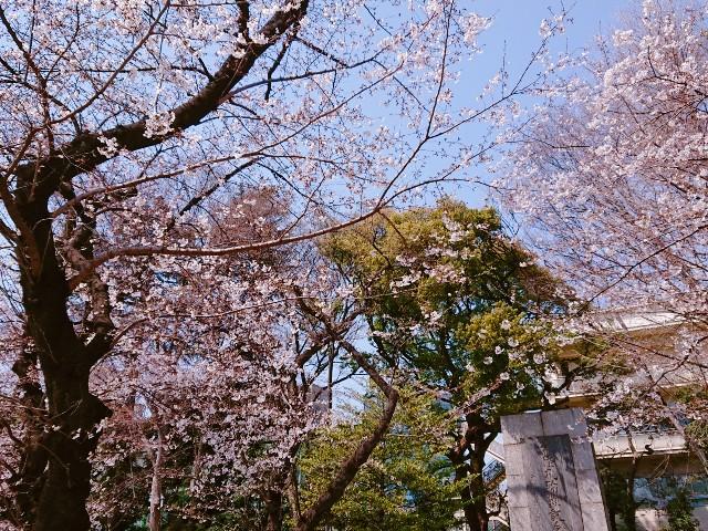 f:id:mitaka_natsu:20190327181624j:image