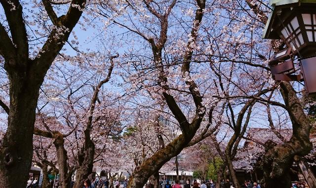 f:id:mitaka_natsu:20190327181806j:image