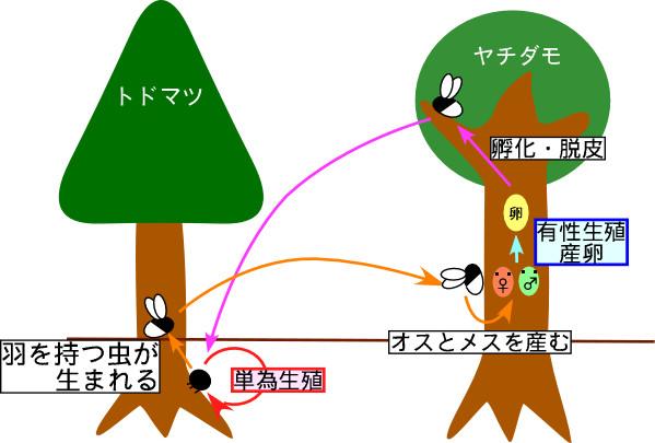f:id:mitotomo:20061122233010j:image