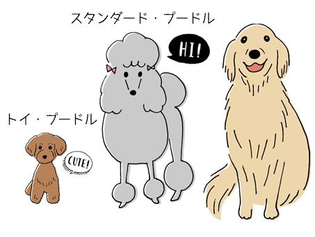 トイプードル、スタンダードプードル、ゴールデンレトリバーが横に並んでいる犬イラスト。