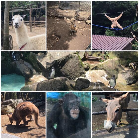 伊豆シャボテン公園にいるいろいろな動物たち