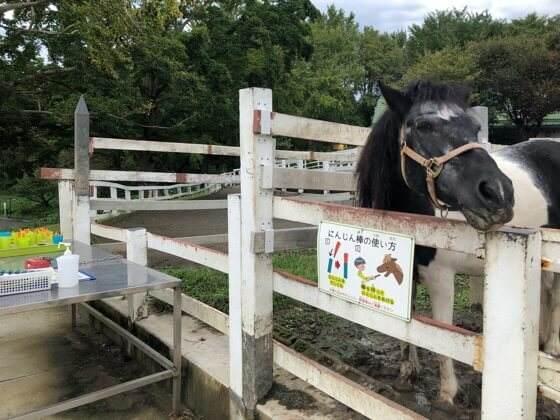 横浜市こどもの国のポニー牧場にいる馬とエサのニンジン