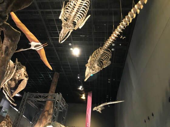 神奈川県小田原市にある生命の星地球博物館の恐竜やクジラの展示