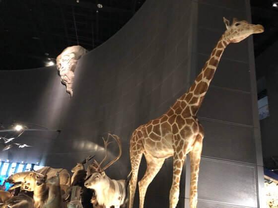 神奈川県小田原市にある生命の星地球博物館の動物の展示