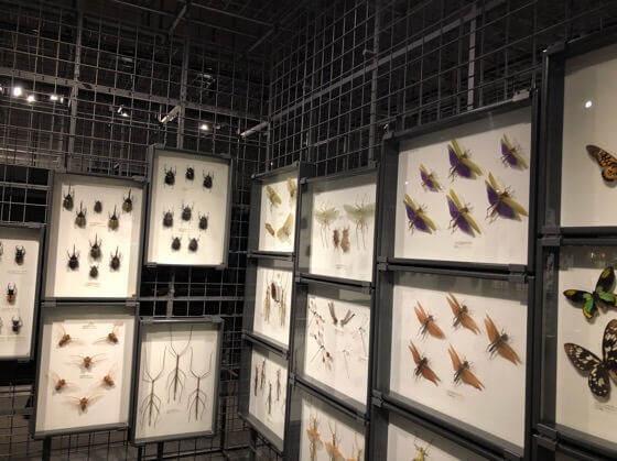 神奈川県小田原市にある生命の星地球博物館の虫の展示