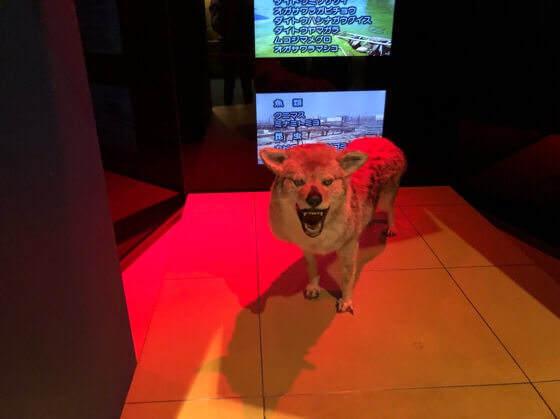 神奈川県小田原市にある生命の星地球博物館の絶滅危惧種の展示