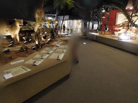 小田原市にある生命の星地球博物館の展示