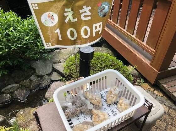箱根湯本にある天成園にいる鯉のエサ