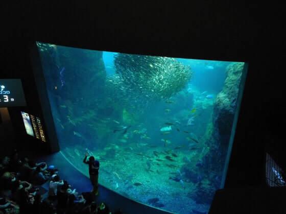 新江ノ島水族館の相模湾大水槽