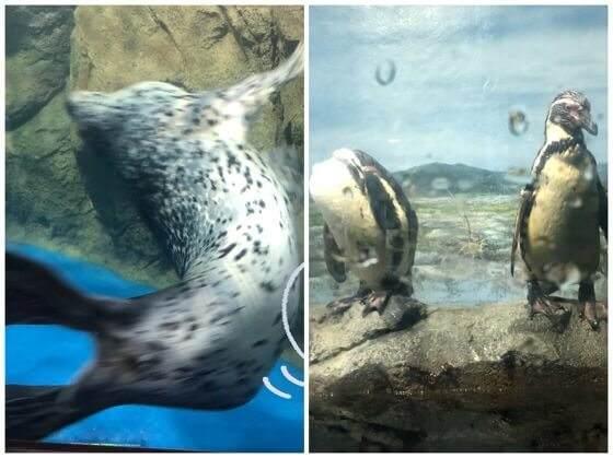 新江ノ島水族館のアザラシとペンギン