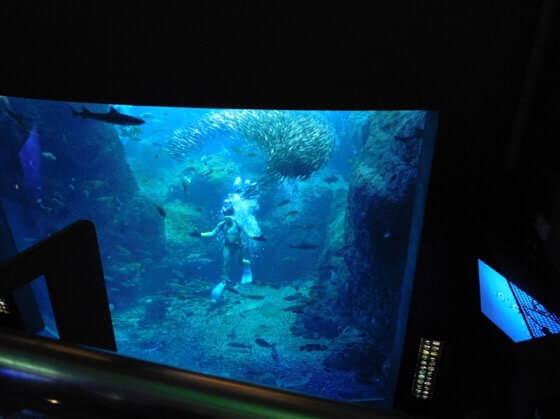 新江ノ島水族館のショーのうおゴコロ