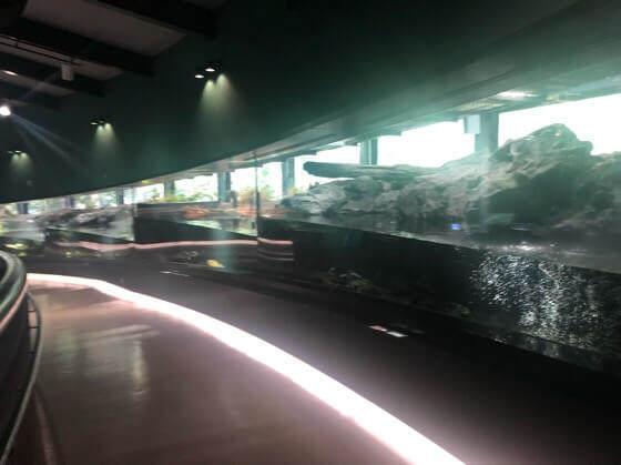 相模川ふれあい科学館の相模川をモデルにした長い水槽