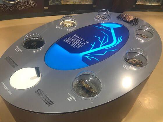 相模川ふれあい科学館に展示してあるモズクガニの一生