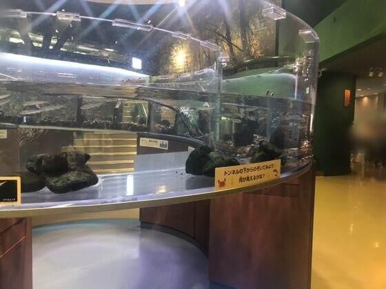 相模川ふれあい科学館に展示してあるトンネル型の水槽