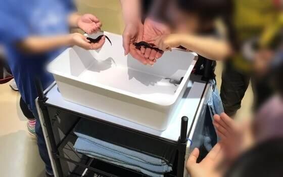 相模川ふれあい科学館でタッチできるヤモリ