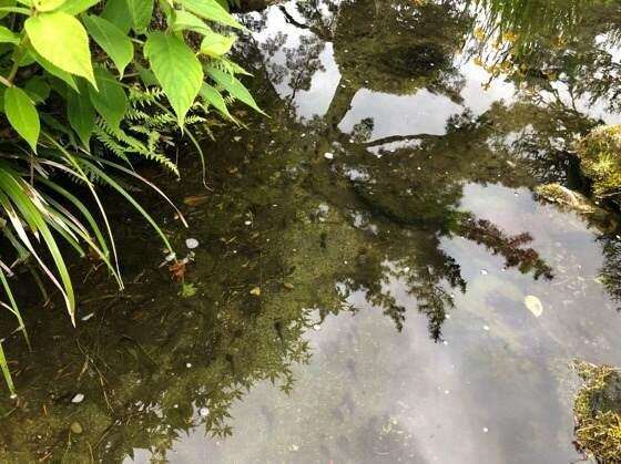 箱根小涌園ユネッサンにある蕎麦貴賓館の庭園