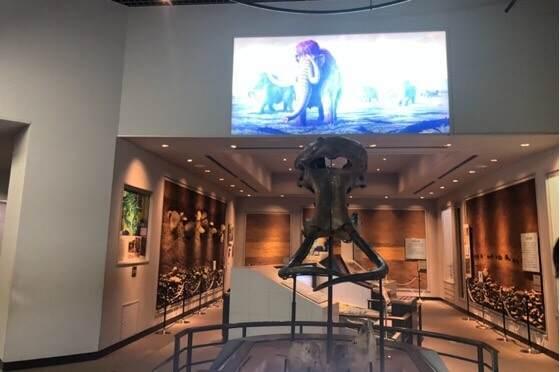 神奈川県相模原市にある相模原市立博物館のマンモス