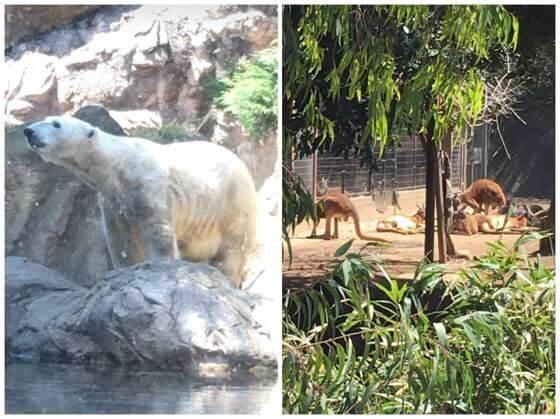 ズーラシアのホッキョクグマとカンガルー