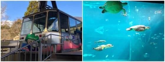 箱根園にある箱根園水族館と駒ヶ岳ロープウェイ