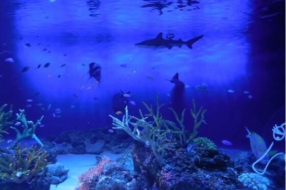 雨の日でも楽しめる新江ノ島水族館