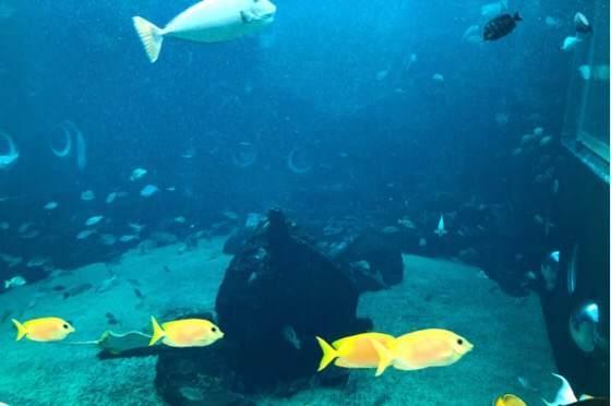 雨でも遊べる箱根園水族館