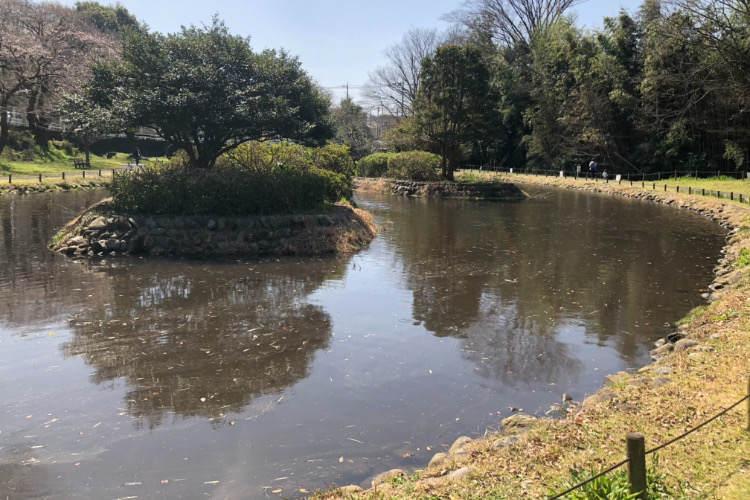 県立相模原公園のせせらぎの園の鯉がいる池