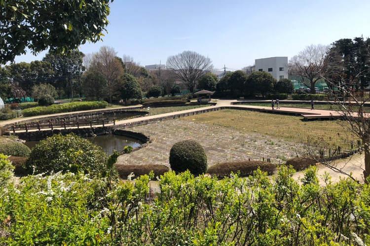 県立相模原公園にある水無月園の菖蒲池
