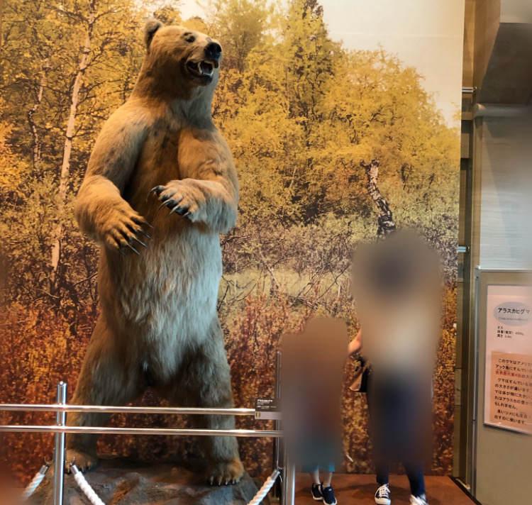 生命の星地球博物館の大きなアラスカヒグマ