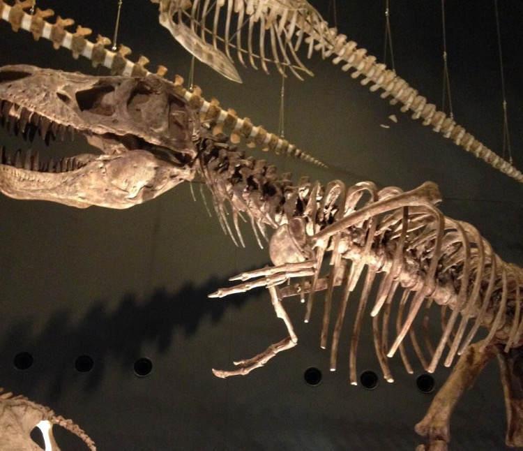 生命の星地球博物館の恐竜の骨