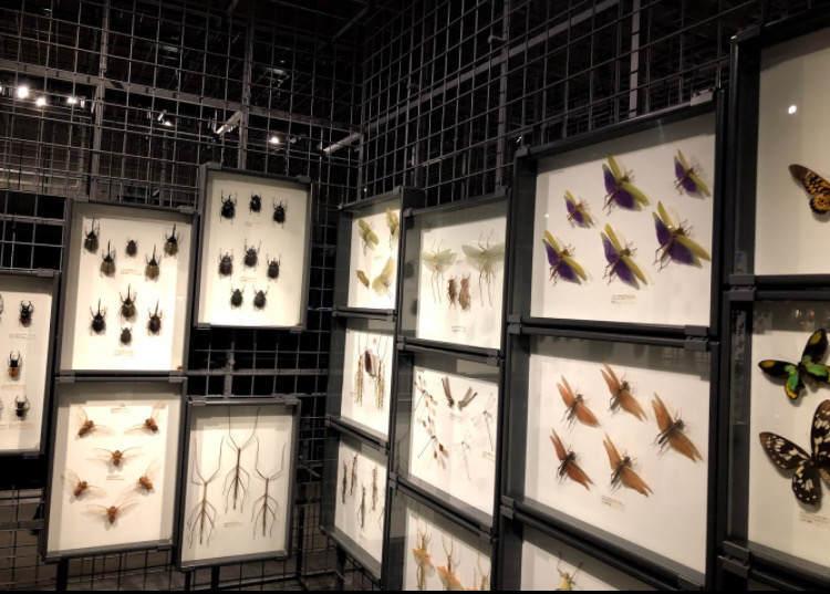 生命の星地球博物館の虫の標本