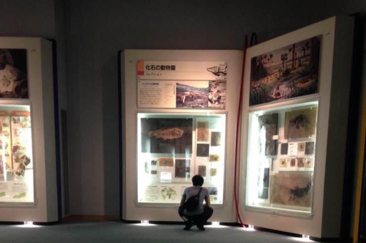 生命の星地球博物館のジャンボブックを覗いている人