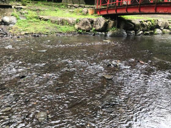 神奈川県南足柄にある夕日の滝の川