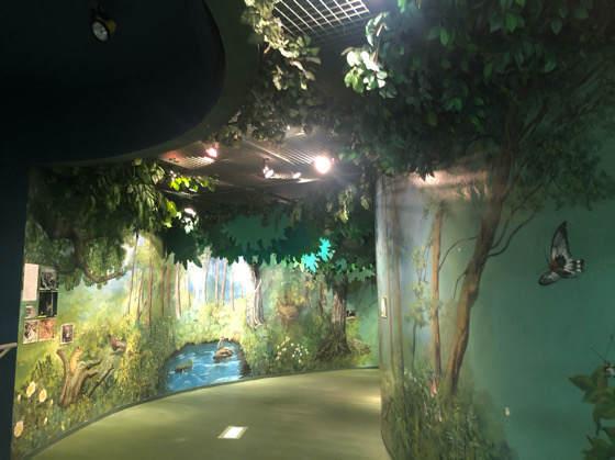 箱根森のふれあい館の森のテーマ館内部
