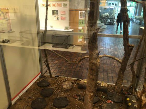箱根森のふれあい館の生きた昆虫展のクワガタが入った大きなケース