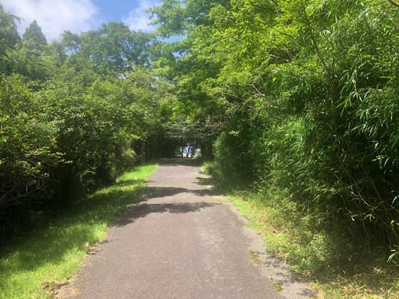 箱根安らぎの森のセラピーロード