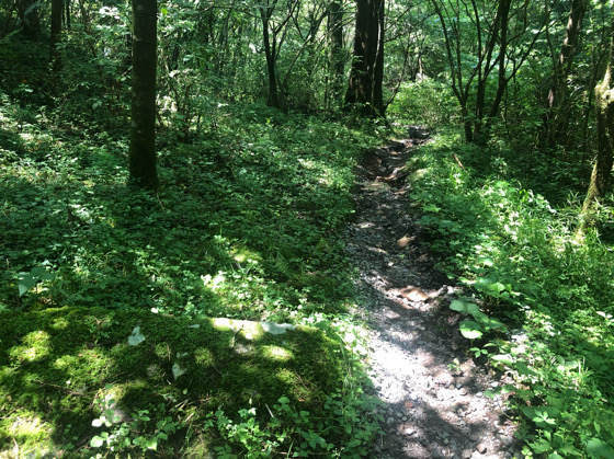 箱根やすらぎの森の中