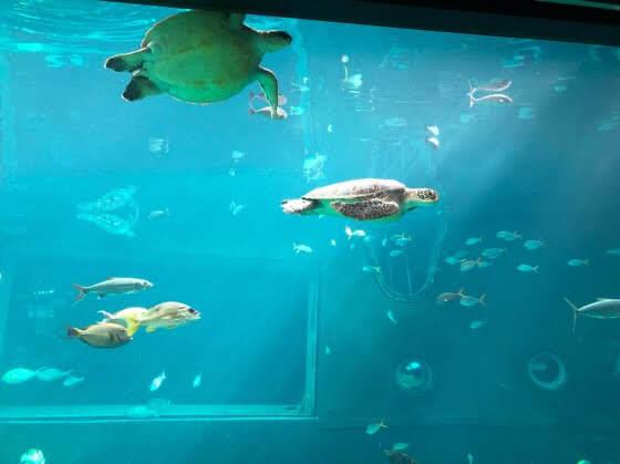 箱根園水族館の巨大水槽