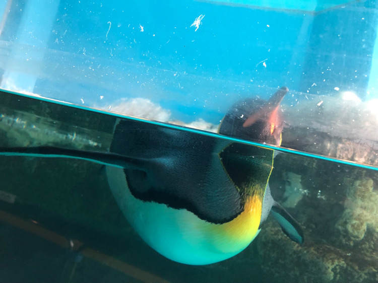 箱根園水族館のペンギン
