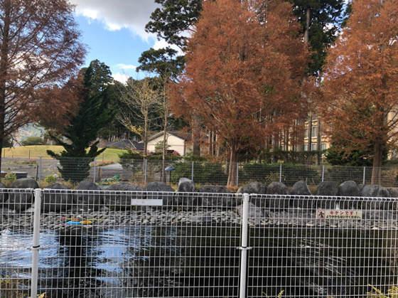 箱根園のバイカルアザラシがいる屋外のプール
