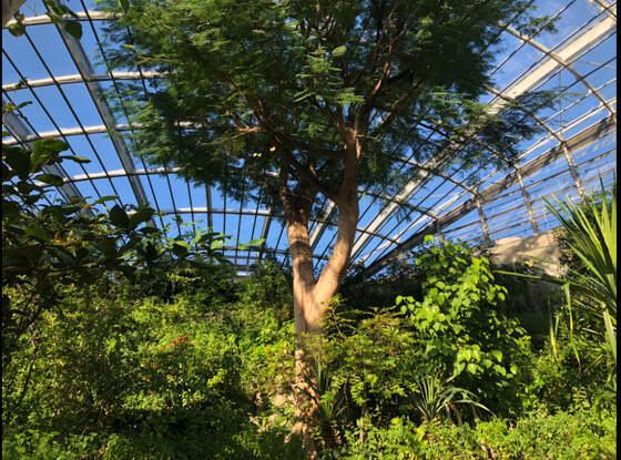 多摩動物公園にある昆虫館の昆虫生態園