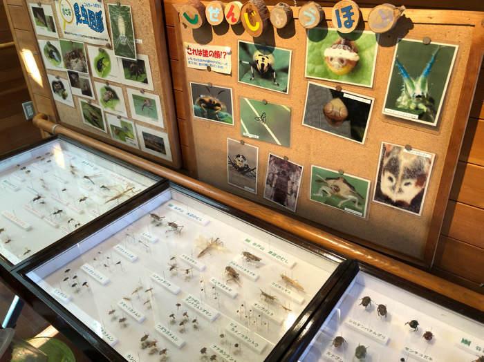 座間谷戸山公園のパークセンターにある標本