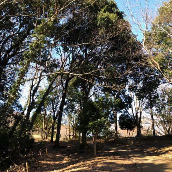 座間谷戸山公園の園内風景
