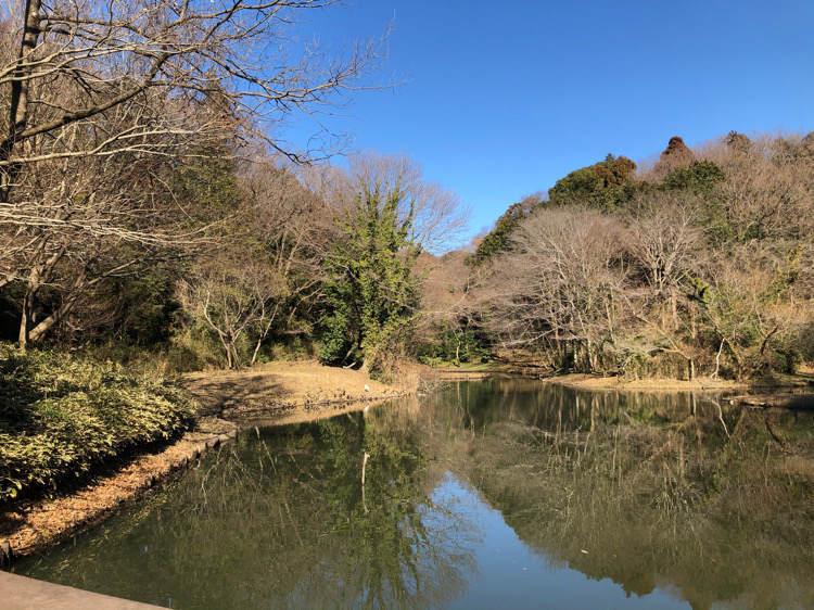 座間谷戸山公園の水鳥の池