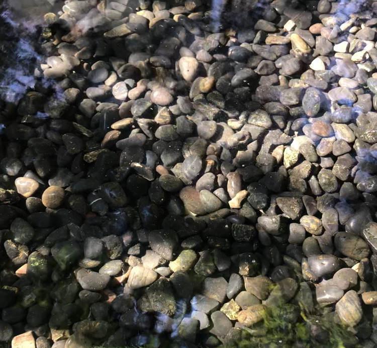座間谷戸山公園の湧き水が湧き出るところ