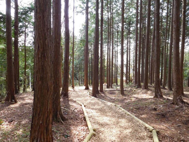 三島スカイウォークにある恐竜アドベンチャーのあるキコロの森