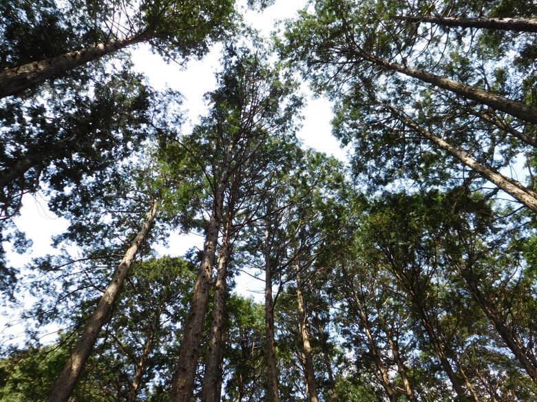 三島スカイウォークにある恐竜アドベンチャーのキコロの森