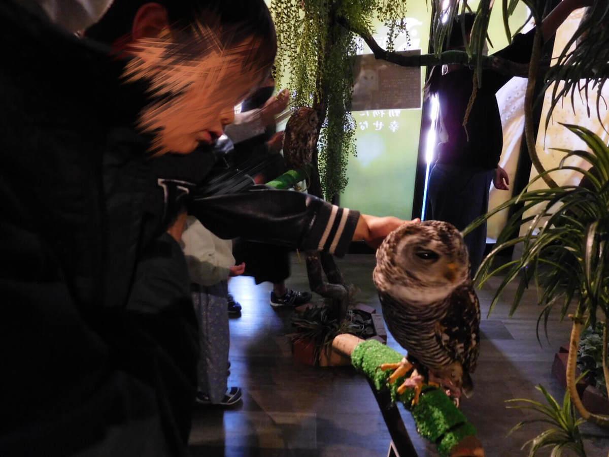 フクロウと触れ合える三島スカイウォークのふろっくでフクロウに触る子ども
