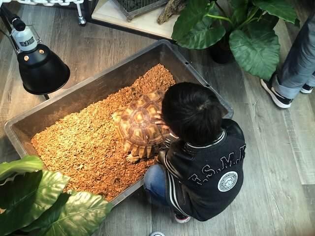 フクロウと触れ合える三島スカイウォークのふろっくにいる亀